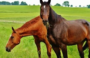 two thoroughbred horses in a bright green meadow