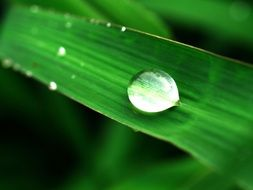 Water Drop on Green plant macro photo