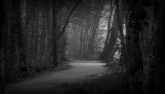 forest trail among foggy forest in black and white image