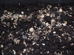 seed mix on the black ground