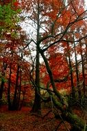 Beautiful forest with red and green leaves on the trees