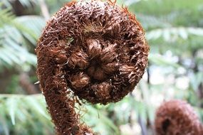 brown fern stem