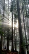 the rays of the sun among the trees