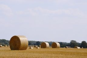 round straw bales on the agricultural field
