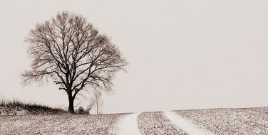 bare Tree on Field at road, winter landscape
