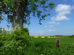 distant view of a rapeseed field in the Mecklenburg region