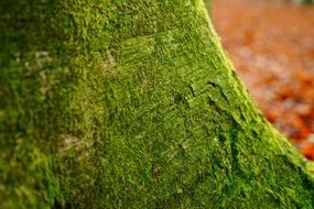 green moss on deciduous tree