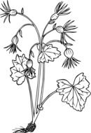graphic image of a plant with five flowers