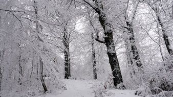 white Snow Wood Winter scene