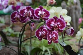 purple orchids in a botanical garden