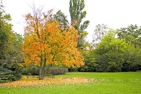 tree with yellow leaves next to green trees