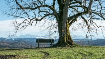 bench near an old tree on a hill