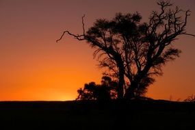 black silhouette of a tree at sunset in a landscape of namibia