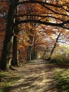 walk path beneath trees in Autumn Forest