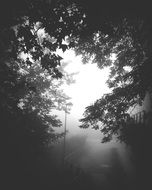 Retro Street lantern in mist among branches