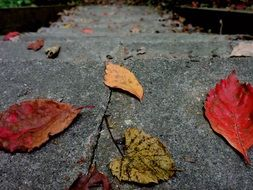 fallen autumn leaves on stone steps