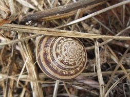 Snail in a spiral shell