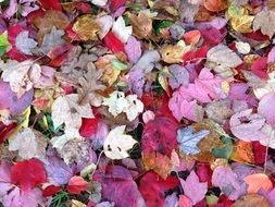 autumn colorful leaves on ground