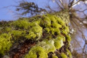 green moss on a tree close-up