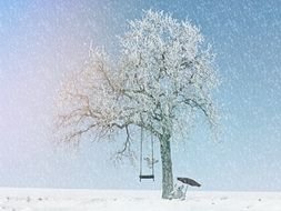 Beautiful landscape with the tree with the snow in winter