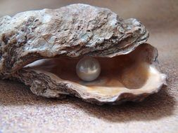 pearl in the oyster of the north sea