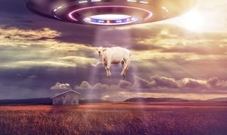 UFO abducts a cow drawing
