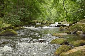 river among stones in a green deciduous forest