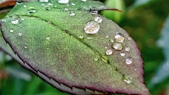drops of water on a green leaf of a plant
