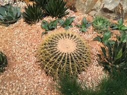 big Cactus green plants around