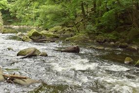 river among stones in deciduous forest