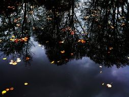 colorful autumn leaves float in the pond