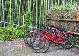 red bikes parked at Bamboo Forest, Japan, kyoto, Arashiyama