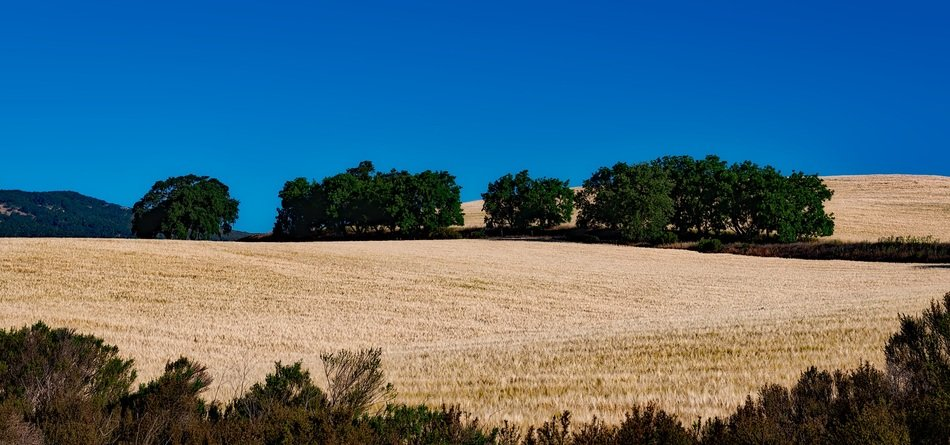 landscape of agriculture field in California on a sunny day