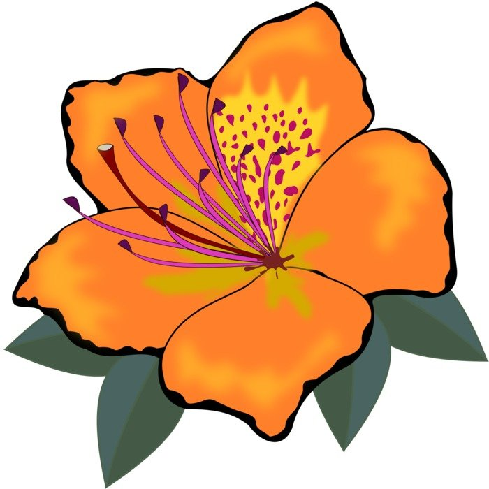 clip art of an orange flower
