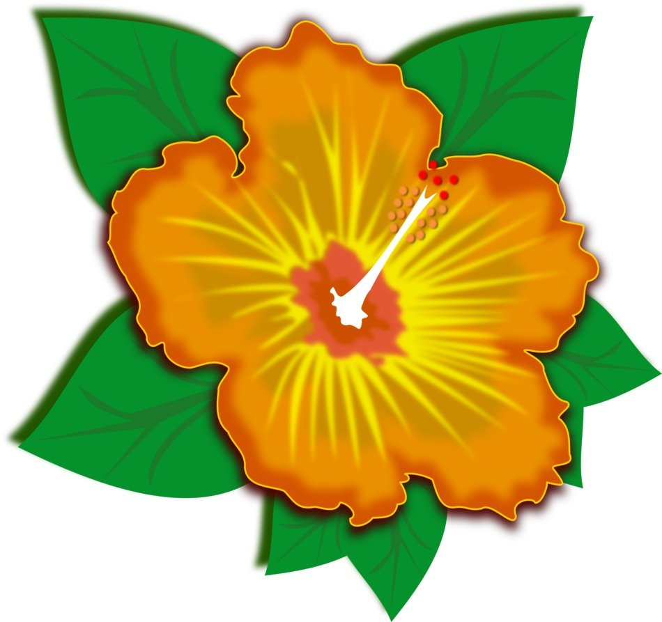 clip art of an orange spring flower