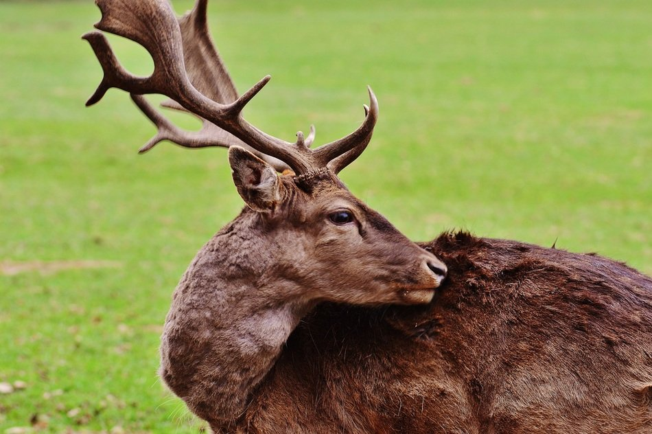 Wildpark Poing young-stag