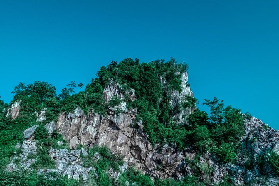green trees on a rock under a blue sky