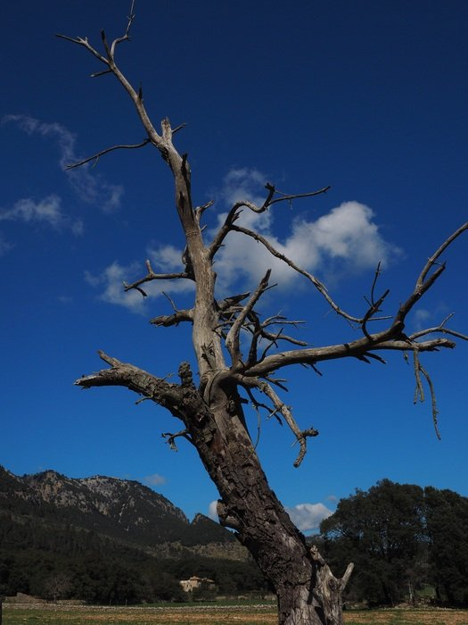 picture of a dead tree