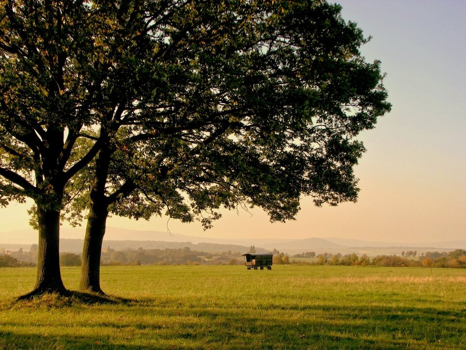 two large trees among green pasture