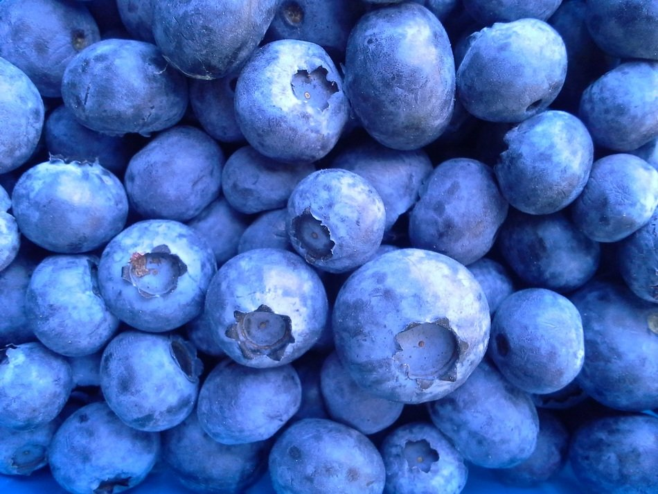 A lot of blueberries