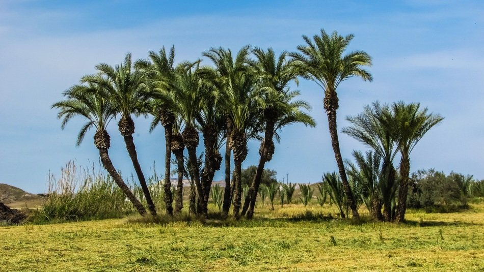 Landscape of palm trees in Cyprus