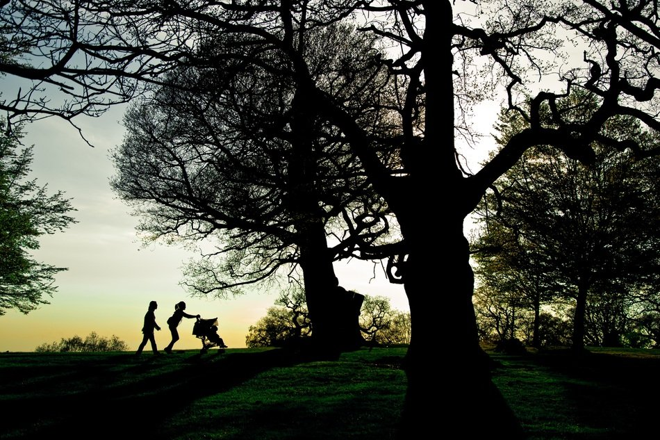 silhouette of family walking among trees at Sunset, uk, england, London, Richmond Park