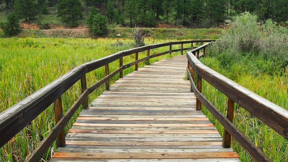 wooden foot bridge over a green meadow