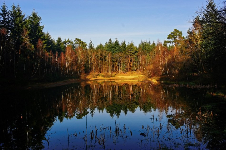 forest is reflected in the lake