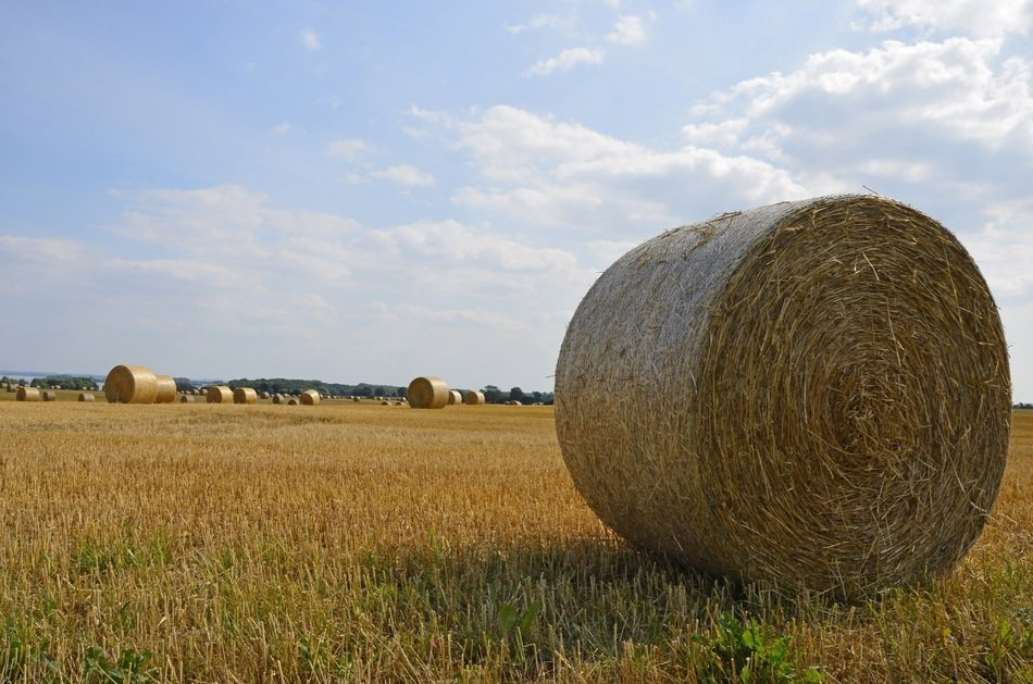 straw bales on Harvested Field