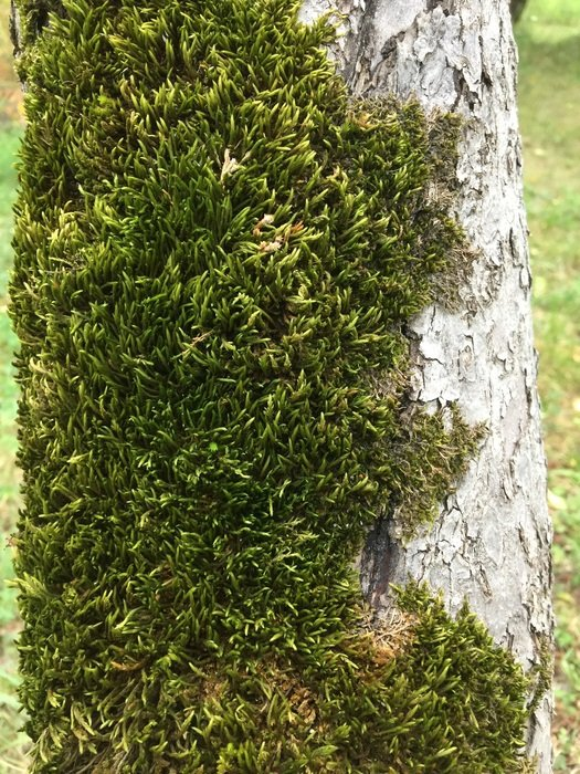 green moss on a tree trunk in the garden