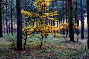 Autumn Colorful forest view