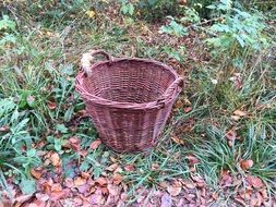 big brown basket with handles on the grass