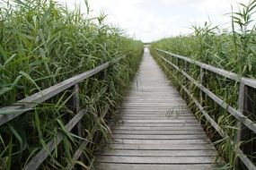 endless wooden bridge among wetlands in south germany
