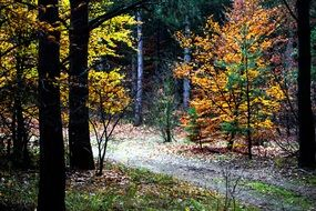 Autumn mood in a forest